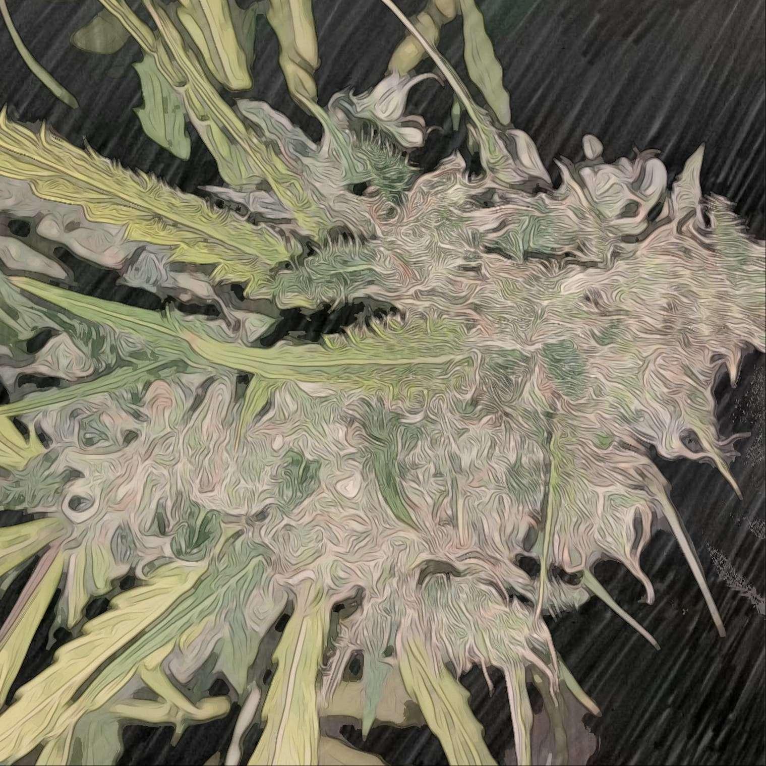 1000w hps indoor grow in soilless mix (bag seed) - Grow Journals