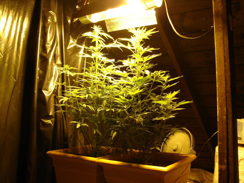 Grow Room Design And Grow Room Setup