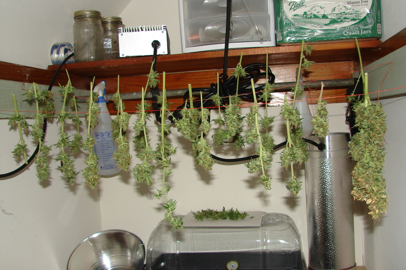 Lets Build A Grow Room Cannabis Cultivation Growery