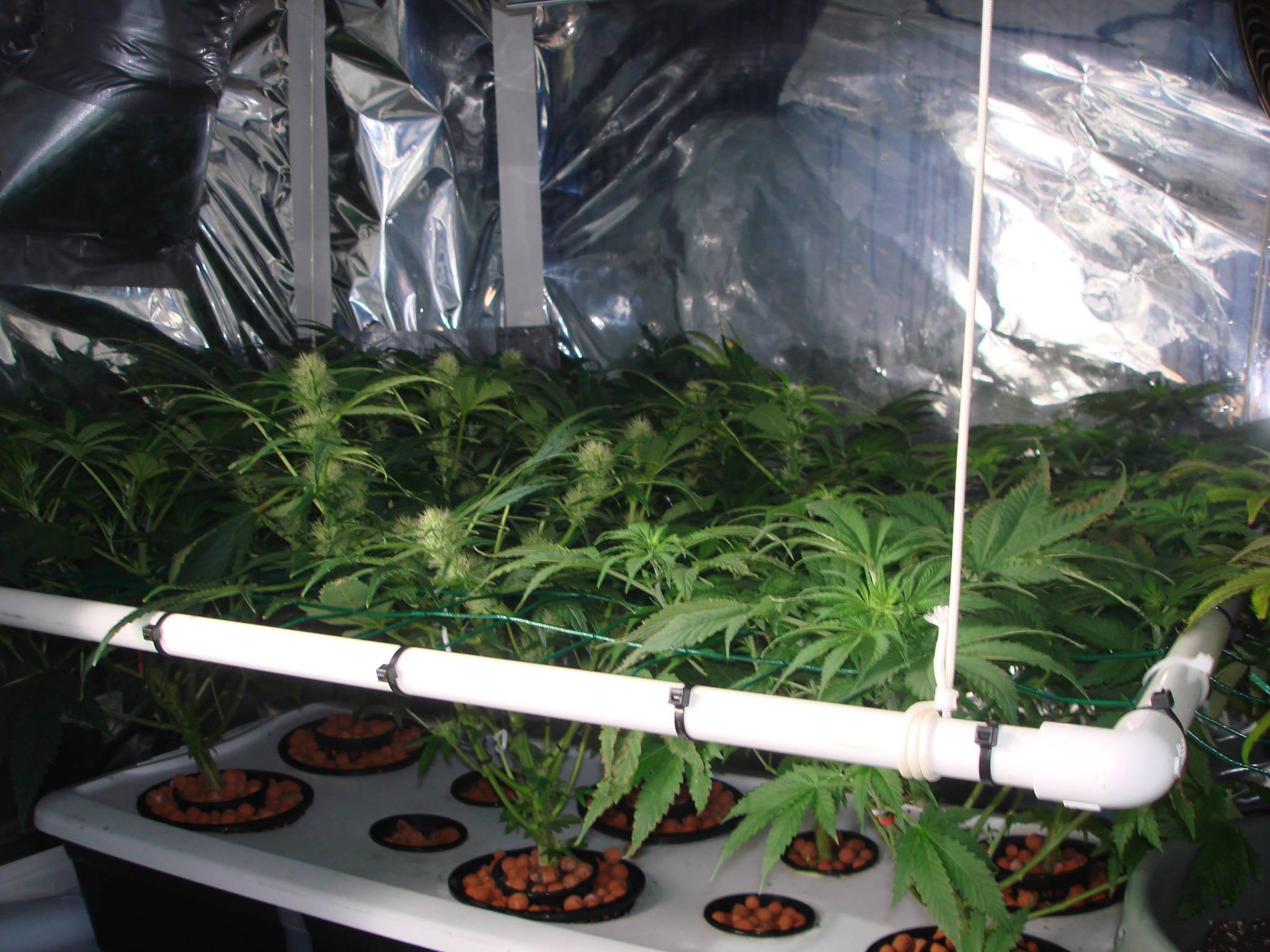 Small Hydro Grow In Fridge