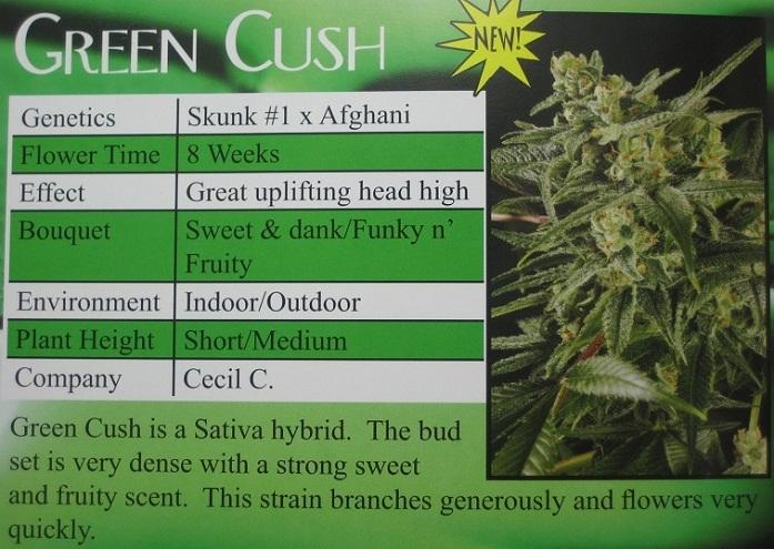 green cush elapsed duration - 697×495