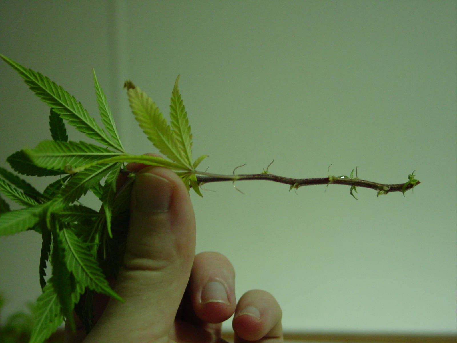 how to put cannabis grower on a resume