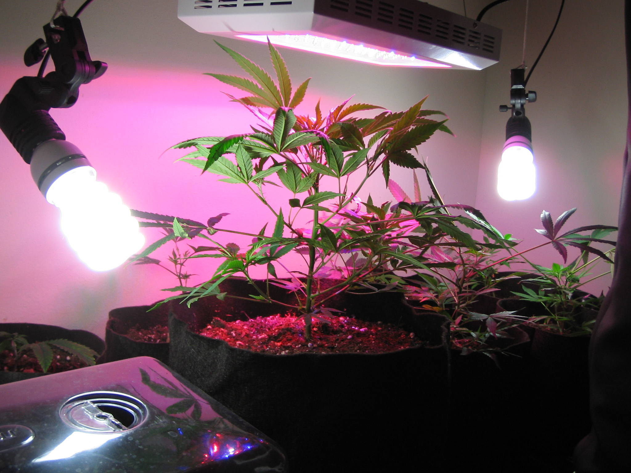 Electricity Problem Cannabis Cultivation Growery