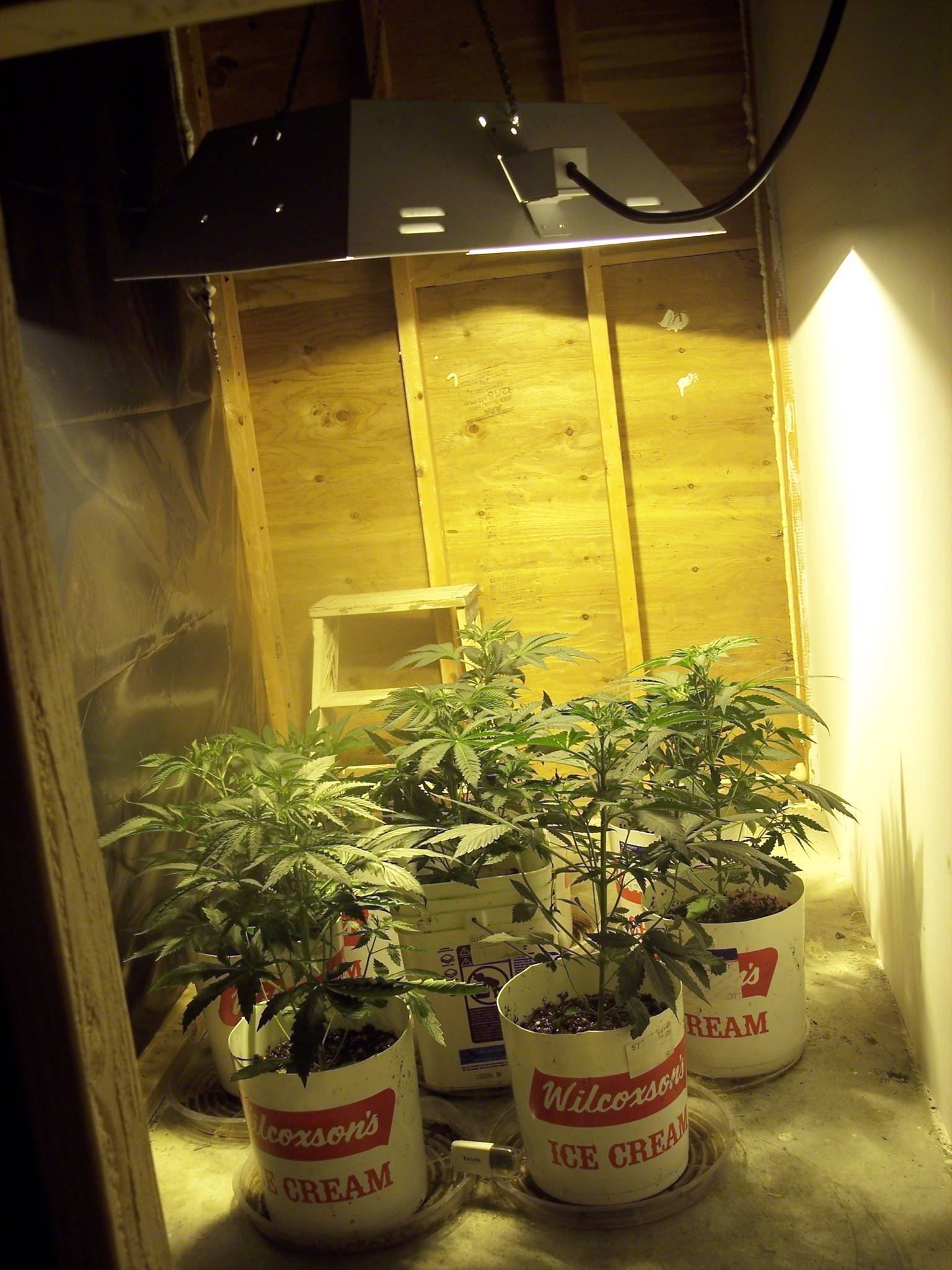 Moms First Grow Marijuana Cultivation Growery Message
