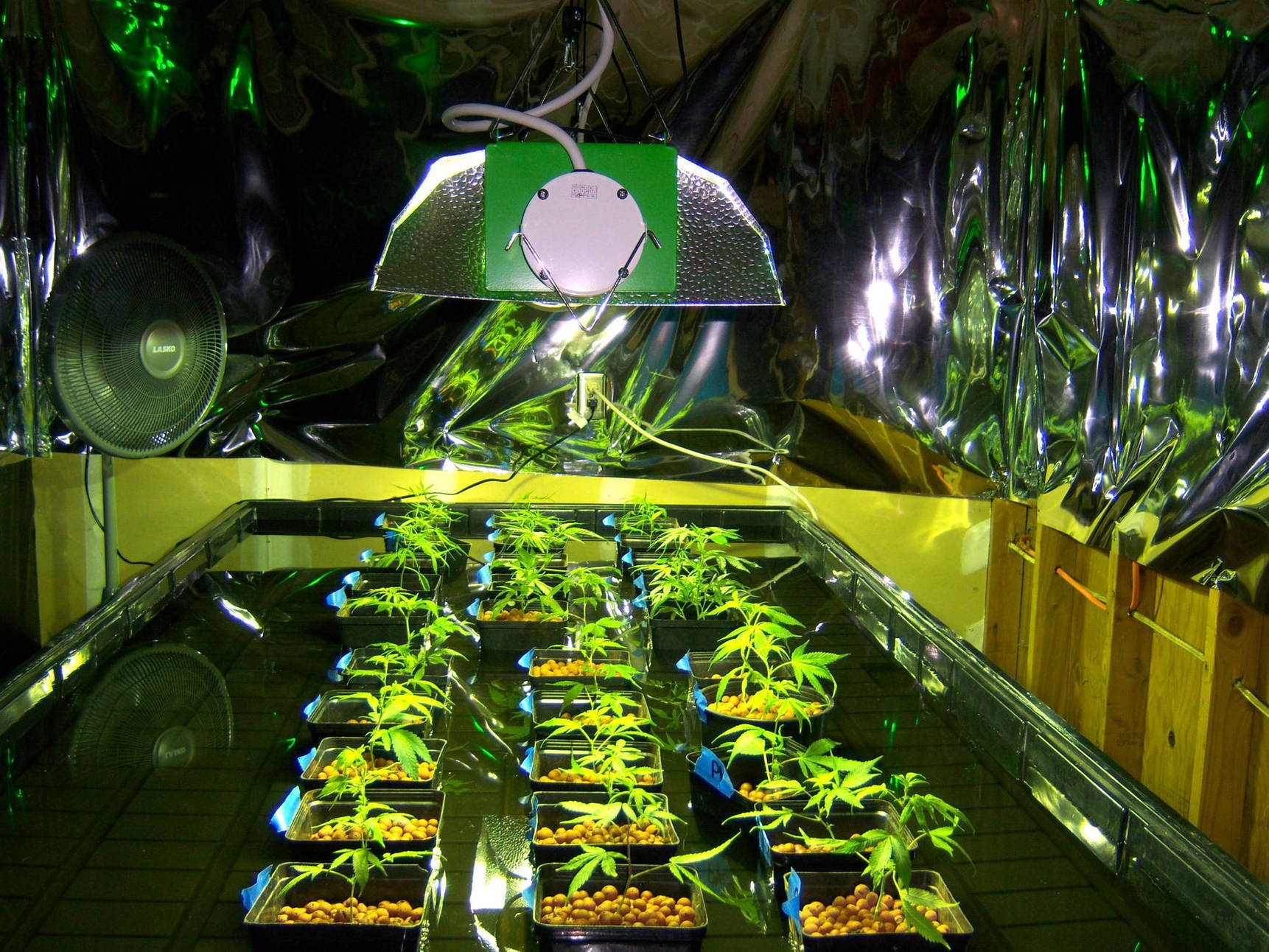 Light Grow Room Setup