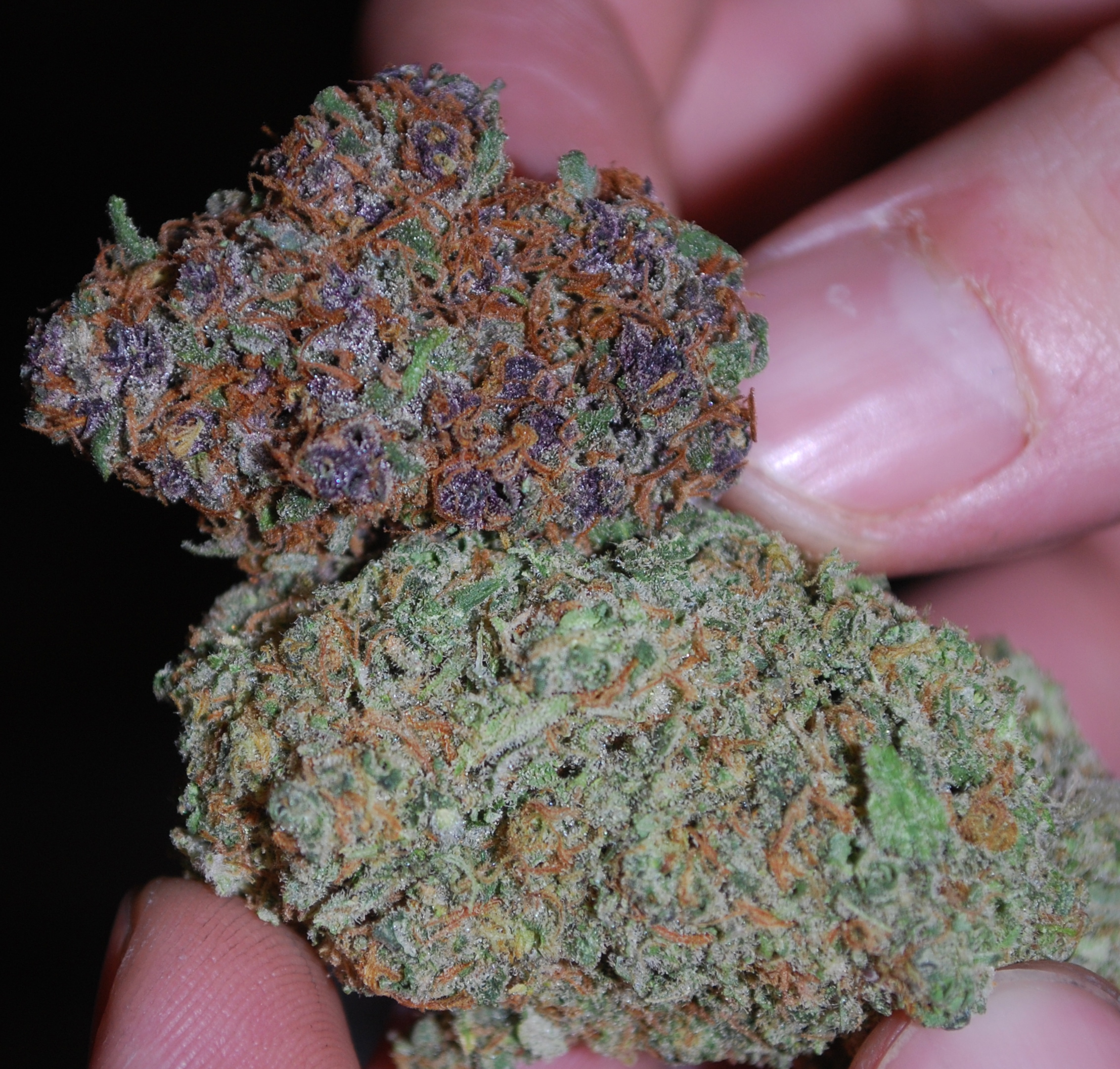 Image Result For Can Marijuana Be