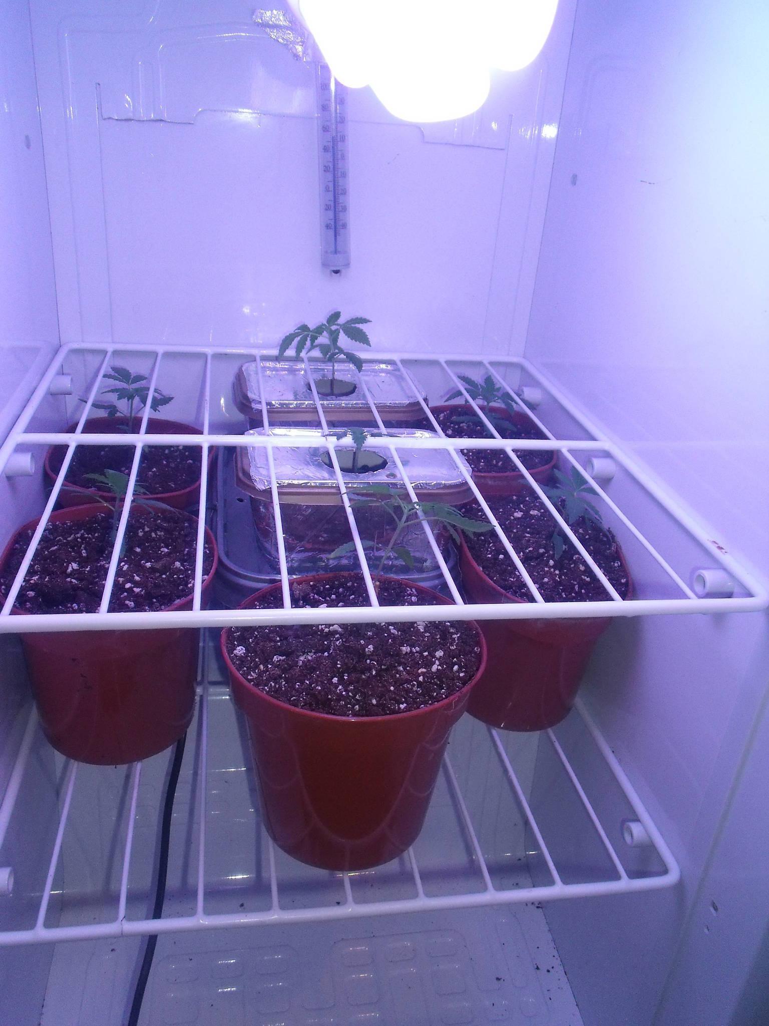 how to make a mini fridge grow box