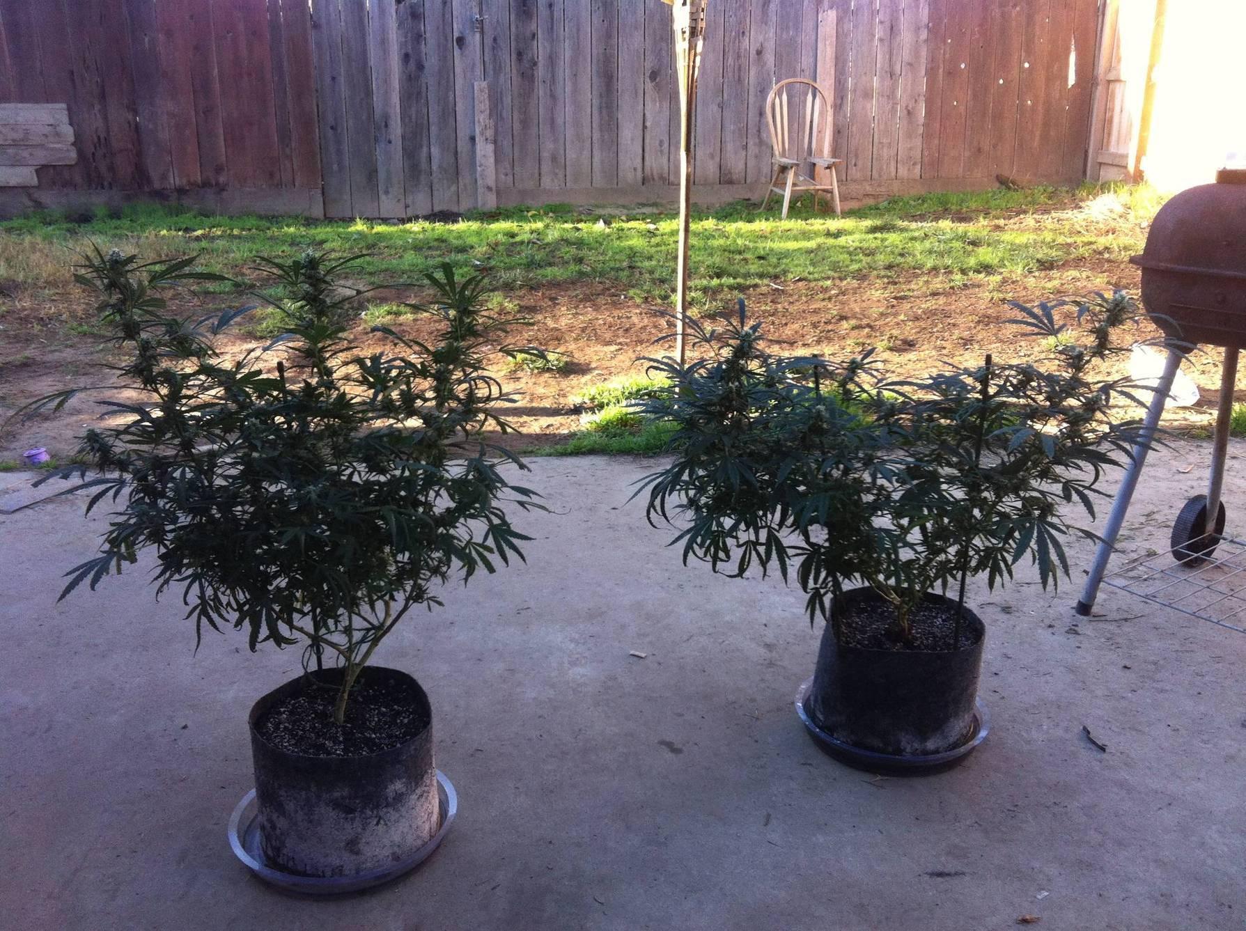 Green Smart Pots 3 Gallon Smart Pots Close